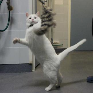 Toisen kissan hoito (VK49004)
