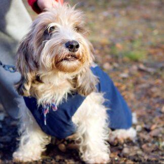 Toisen koiran hoito (VK49002)
